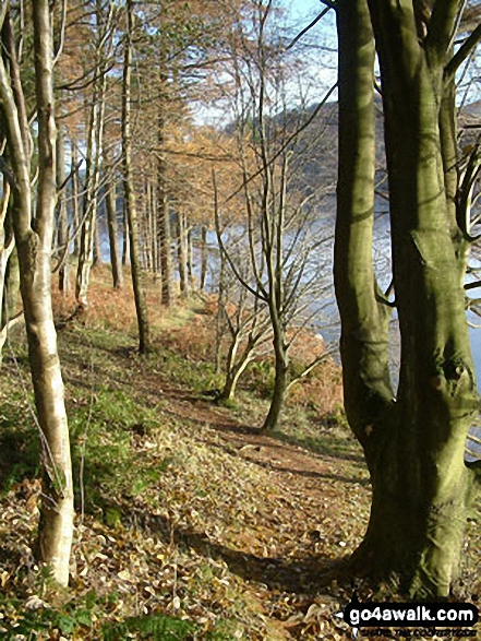 Woodland on the shores of Thirlmere