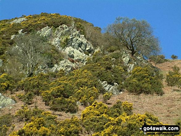 Priest's Crag