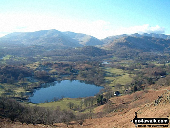 Loughrigg Tarn from Loughrigg Fell