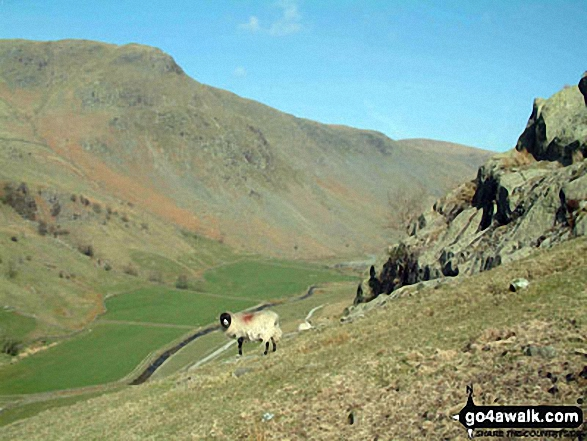 Shipman Knotts and Longsleddale from Great Howe