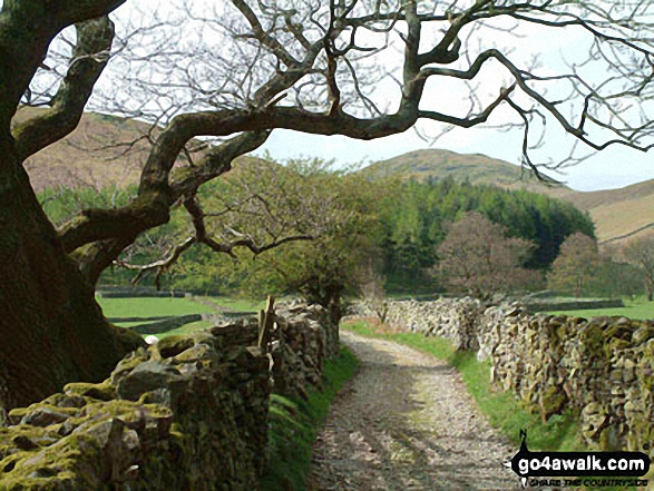 The Path to Hen Comb from Loweswater. Walk route map c212 Burnbank Fell, Gavel Fell, Hen Comb and Mellbreak from Loweswater photo