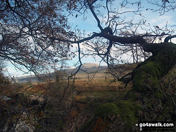 Ingleborough through the trees from above Beezley Falls, The Ingleton Waterfalls