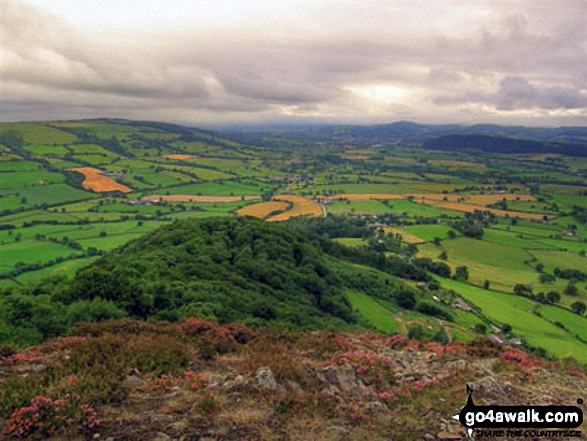 Looking South West down the steep ridge from Moel y Golfa into the Severn Valley towards Welshpool with the A458 road also visible