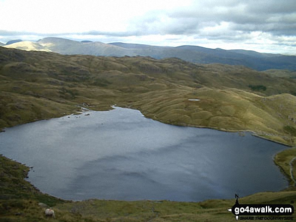 Stickle Tarn from Harrison Stickle in The Langdale Pikes. Walk route map c281 The Langdale Pikes via North Rake from The New Dungeon Ghyll, Great Langdale photo