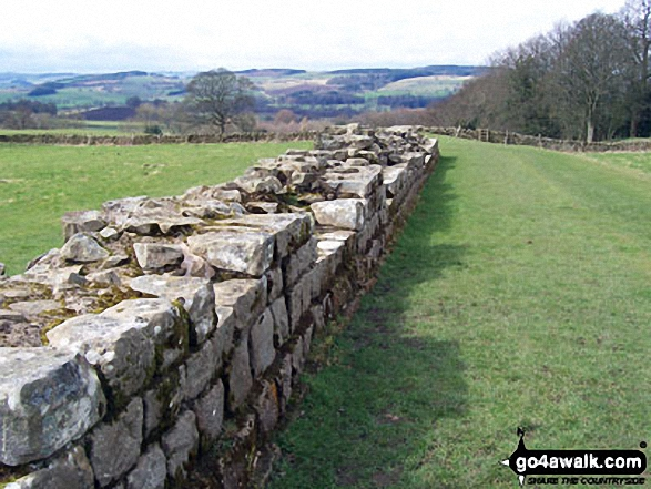 Hadrian's Wall at Planetrees - Walking The Hadrian's Wall Path National Trail - Day 3