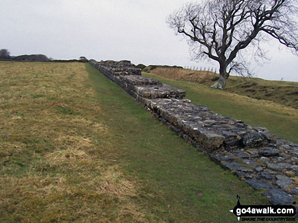 Hadrian's Wall near Black Carts Turret - Walking The Hadrian's Wall Path National Trail - Day 4