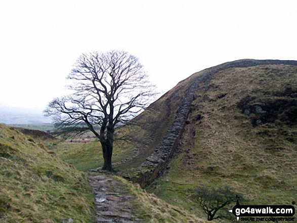 Sycamore Gap - Walking The Hadrian's Wall Path National Trail - Day 4