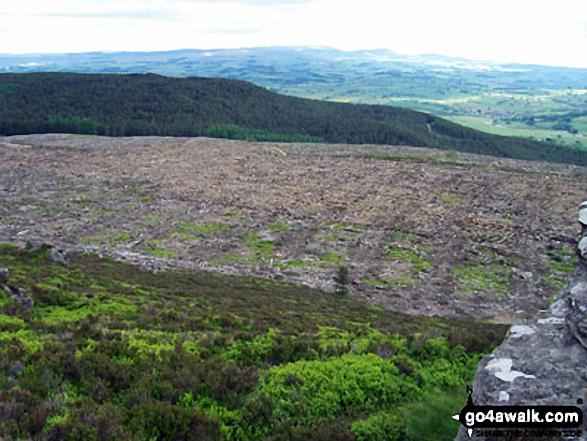 Forestry work from Simonside