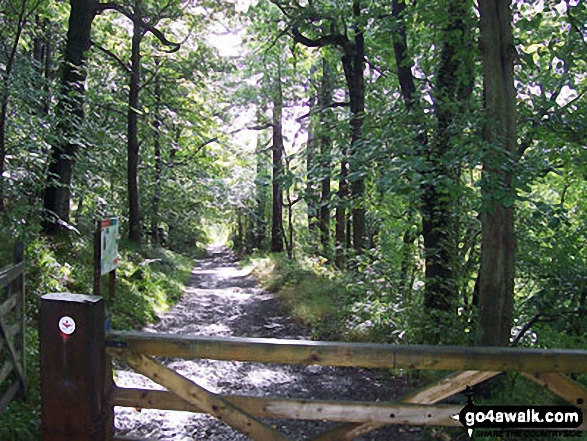 The Red Kite Trail in Chopwell Wood