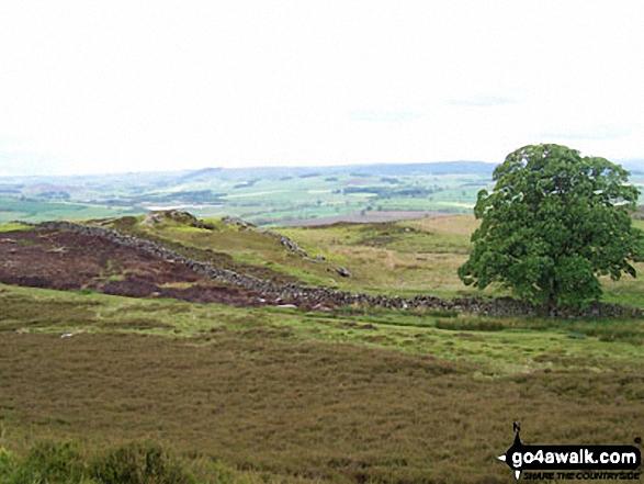 Looking West from Glitteringstone