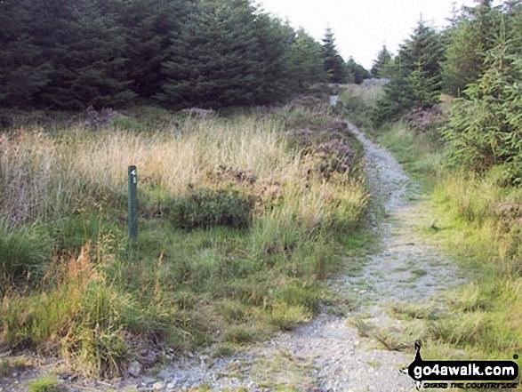 Walk gw201 The Nantlle Ridge from Rhyd-Ddu - Path through Beddgelert Forest