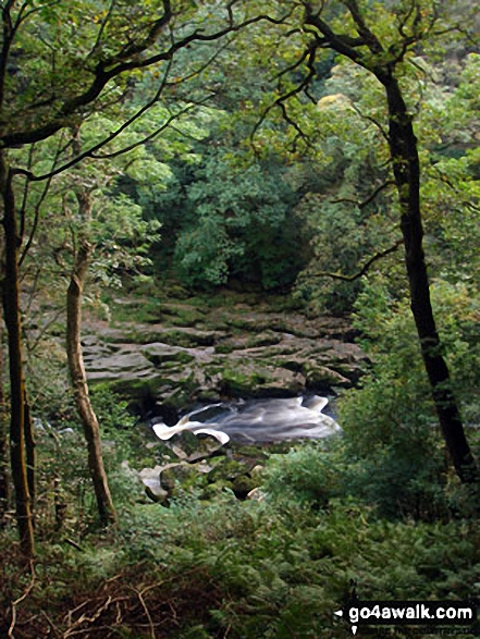 The River Wharf tumbles through The Strid in Strid Wood, Wharfedale. Walk route map ny147 Wharfedale from Bolton Abbey, Wharfedale photo
