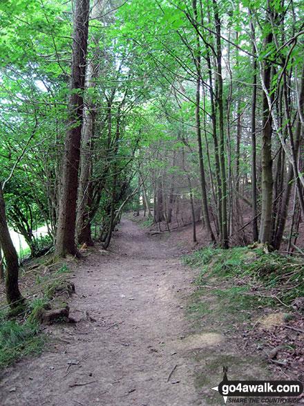 Walk ny190 Appleton-le-Moors from Hutton-le-Hole - Walking through Hagg Wood near Lastingham