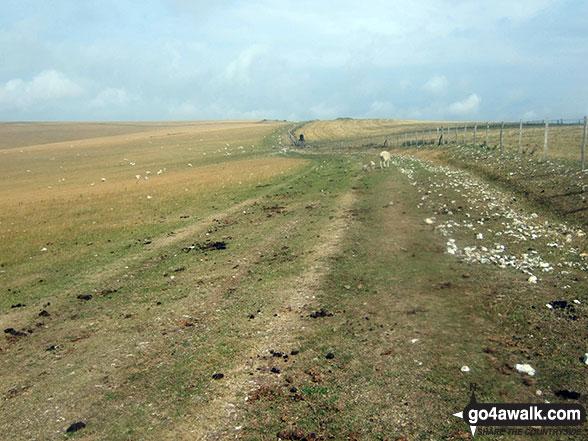 Walk es144 Firle Beacon from Alfriston - Walking across Bostal Hill