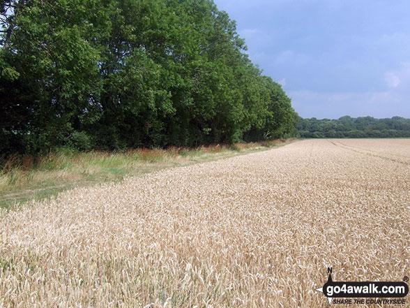 Fields near Bopeep Farm