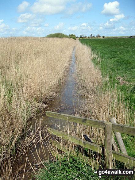 Drainage dyke near Horsey