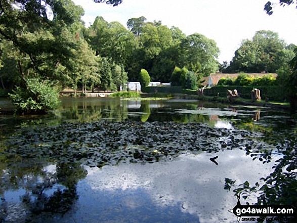 Leigh Place Pond near Godstone
