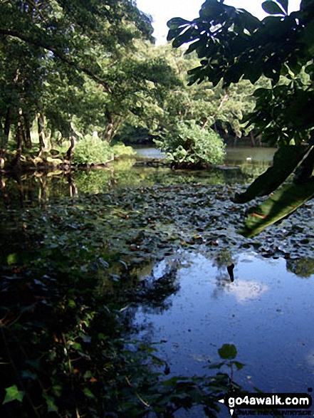 Leigh Place Pond near Godstone. Walk route map su131 Godstone from Bletchingley photo