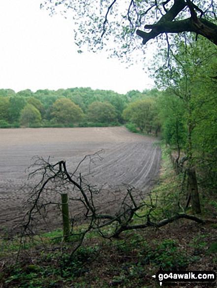 Farmland on the edge of Snidley Moor Wood