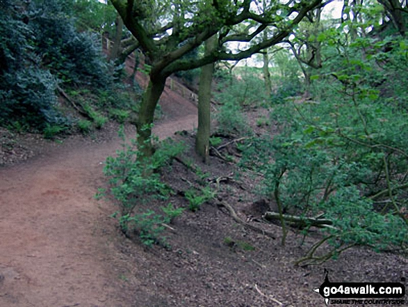 The Sandstone Trail in Dunsdale Wood near Frodsham
