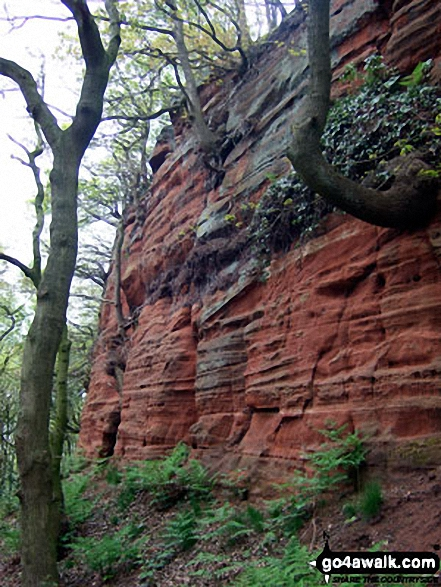 On The Sandstone Trail in Dunsdale Wood near Frodsham