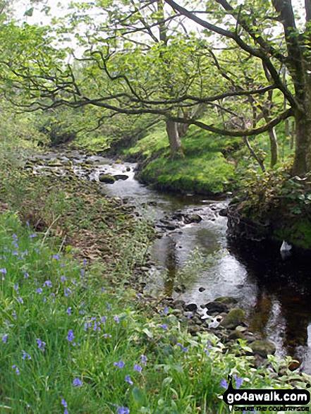 Tarnbrook Wyre near Tarnbrook