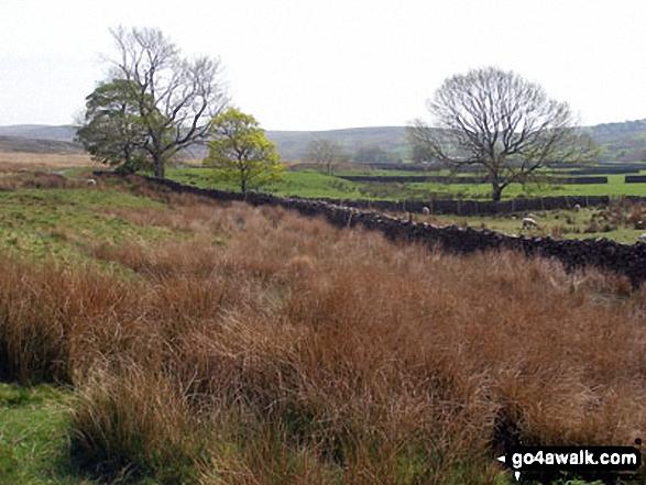 White Moor from Backside of Tarnbrook Fell