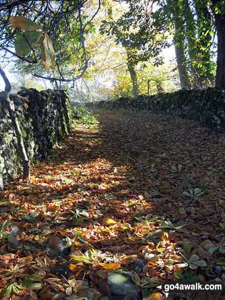 Walled footpath in Beresford Dale