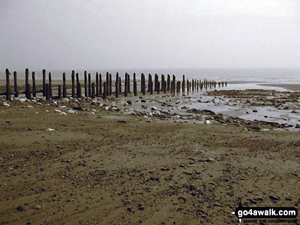 Walk ey119 Spurn Head from Kilnsea - The Kilnsea clays, Spurn Head