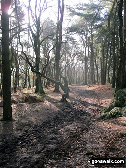 Walking through woodland on the way up to The Cloud (Bosley Cloud)