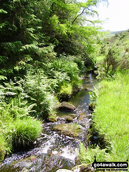 Woodland Stream. Walk route map co168 Brown Willy and Bodmin Moor from St Breward photo