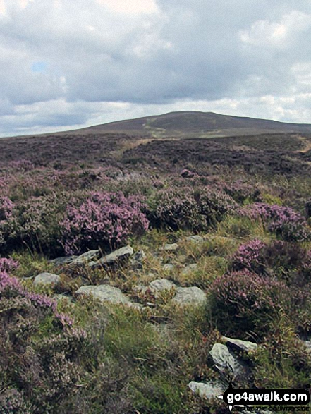 Moel Ferna from the summit of Pen Creigiau'r