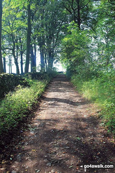 Green Lane (Friden) in woodland near Mere Farm