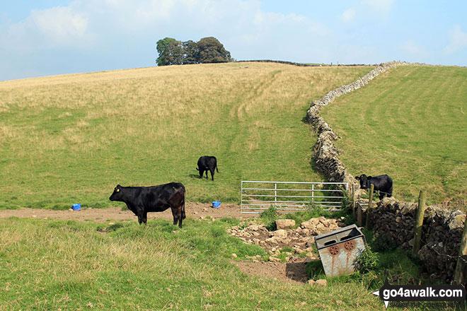 Crossing Gratton Moor