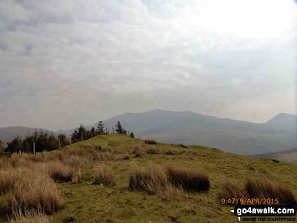 Approaching Beddgelert Forest from below Foel Rudd (Mynydd Mawr)