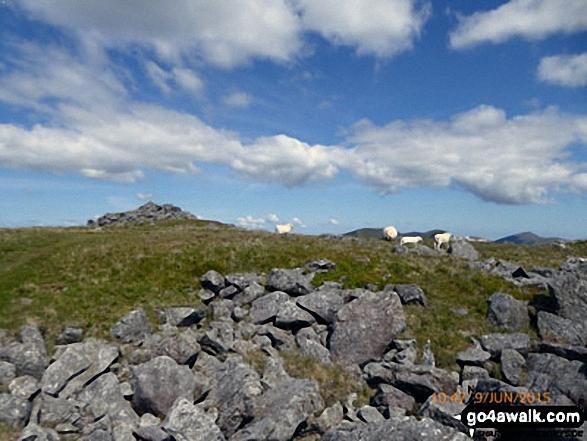 Moel Yr Ogof summit cairn and plateau
