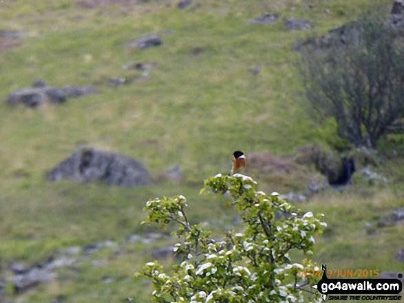 Bird in Bwlch Cwm-trwsgl