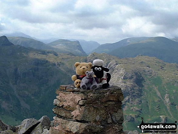Shaun, Tetley & Grizzly on High Raise (Langdale)