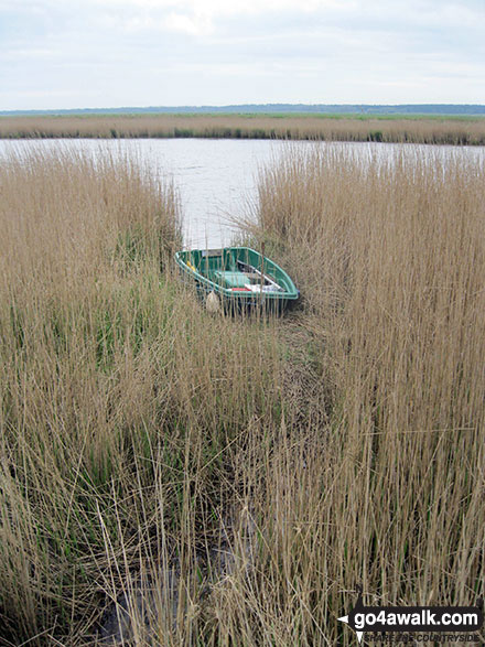 Boat in the reeds on the banks of the River Yare