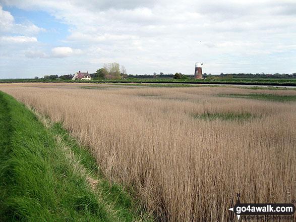 Reedham Marshes