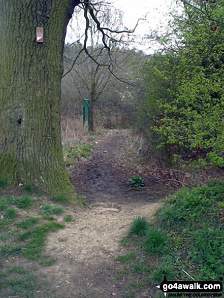 Walk ht112 Fairlands Valley Park, Stevenage - Woodland in Fairlands Valley Park, Stevenage