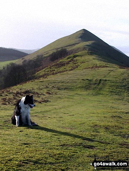 Walk The Lawley walking UK Mountains in The Shropshire Hills Area of Outstanding Natural Beauty  Shropshire    England