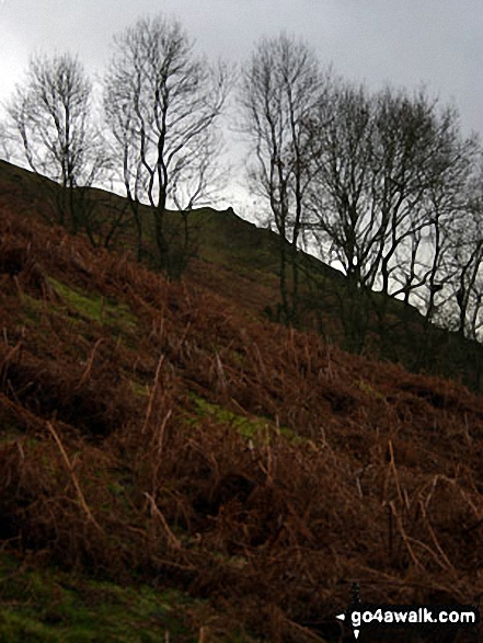 Woodland below Caer Caradoc Hill. Walk route map sh103 Ragleth Hill and Caer Caradoc Hill from Church Stretton photo