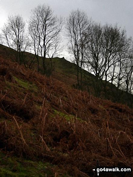 Woodland below Caer Caradoc Hill