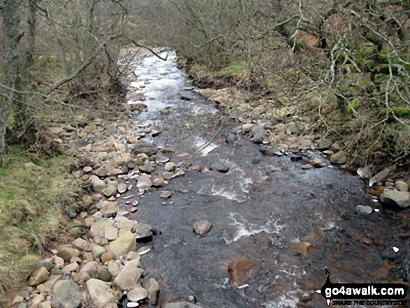 Harthope Burn near Careyburn Bridge. Walk route map n111 The Cheviot and Cold Law from Harthope Burn Valley photo