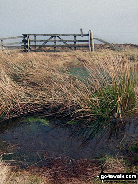 Gate and pool near the summit of Pike Fell