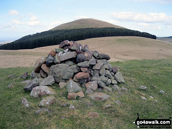 Walk n200 The Schil from Hethpool - Eccles Cairn with Coldsmouth Hill in the background