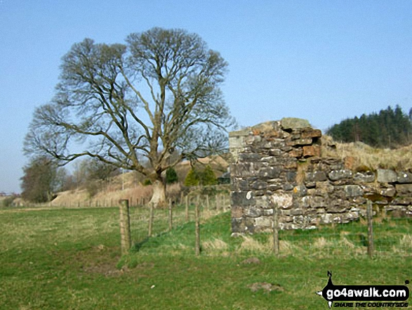 The ruins of Mangerton Tower