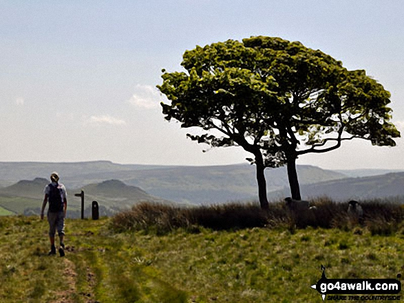 Win Hill (Winhill Pike) and Stanage Edge from a lone tree on Crookstone Hill
