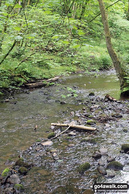 Rosemarkie Burn, The Fairy Glen Waterfalls walk